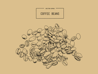 Coffee beans. Hand pencil sketch vector.