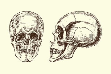 Skull (face and profile), hand drawn doodle, sketch in woodcut style, black and white vector illustration
