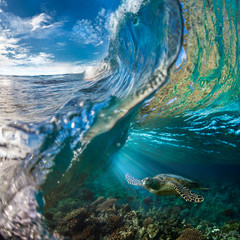 Sea turtle under ocean wave