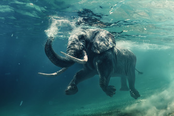 An elephant underwater