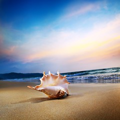 A shell on a tropical beach at sunset time