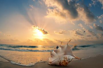 Tropical ocean paradise design postcard. Sandy beach with seashell at the shorebreak line