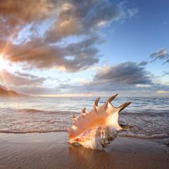 Tropical ocean paradise design postcard. A beach with seashell of giant mollusk on reflected wet sand near shorebreak waves