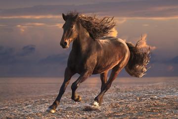 Running horse with streamed mane on sunset sandy beach
