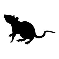 Rat black color icon .