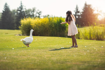 little african american girl feeding goose on green lawn in park with sunlight