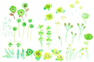 色々な草花 Various flowers