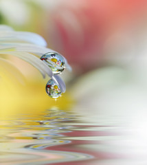 Beautiful flowers reflected in the water, spa concept.Spa still life.Abstract macro photo with water drops.Tranquil closeup art photography.Floral fantasy design.Medical chamomiles.