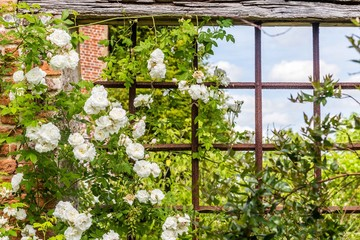 Old British rose garden during spring in Sussex, England