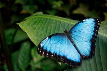 Blue butterfly from Mexico.