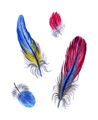 Set of multi-colored bird feathers. Watercolor painting on white background. Isolated with clipping paths.