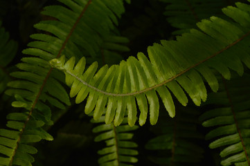 Rama con hojas verdes de  día