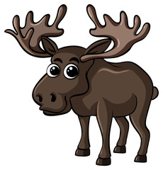 Cute moose on white background