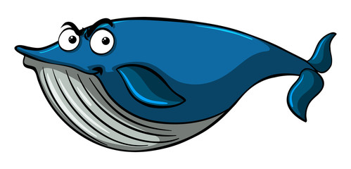 Blue whale with serious face