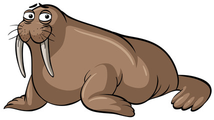 Walrus with sad face on white background