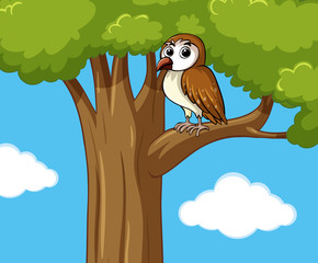 Cute owl on the tree