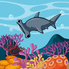 Hammerhead shark swimming under the ocean