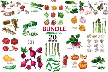 Digital raster detailed line art color 20 vegetables bundle hand drawn retro illustration collection set. Thin artistic pencil outline. Vintage ink flat style, engraved simple doodle
