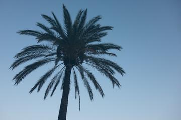 beautiful palm on blue sky background