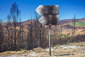 Burned forest after fire in Portugal