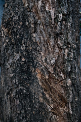 Bark tree and plant