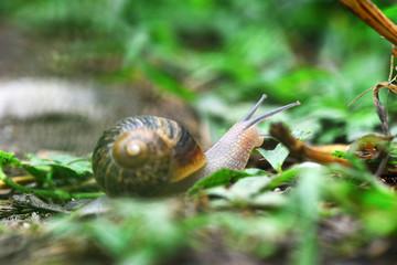 Escargot en balade