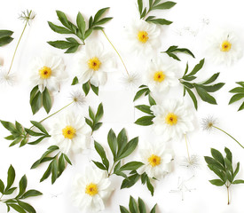Empty paper in the middle of creative arrangement made of white peony flowers, green leaves and pasque-flower seeds with space for text on white background. Top view, flat lay.