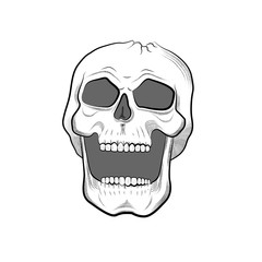 Skull isolated on white background. Vector image. line art style. tattoo graphic.