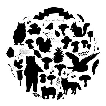 set with the image of leaves, branches, berries, flowers, animals and birds, autumn elements, bear, squirrels, fox, owl. Black and white  silhouette, vector.