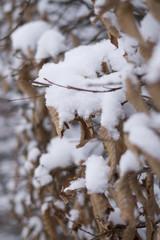 Laub im Winter