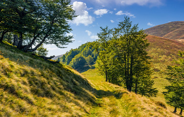 path through the forest on a mountain slope