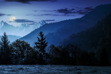 Forest on the hillside in High Tatras at night