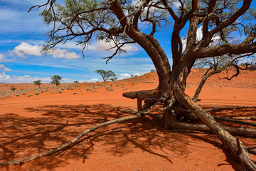 Namibia NamibRand nature reserve