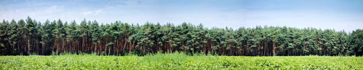 Panorama, Kiefernwald und Landwirtschaft, Hintergrund, Forstwirtschaft, Deutschland