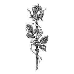 Sketch tattoo. Rose on a long stem and ribbon. Black and white.  Vintage style. Vector illustration