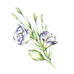 Composition with eustoma. Hand draw watercolor illustration.