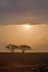 African Acacia Trees at Sunrise