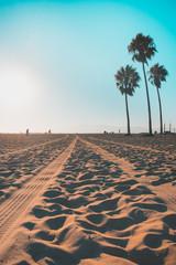 Tire tracks on west coast beach with beautiful palm trees