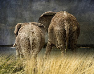 Elephants in the rain Watching storm from grassy prairie, composite