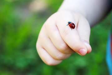 Child hand finger with lady bug crawling on it. Concept for summer outdoors time with family, childhood, youth adventures, environment and nature exploration.