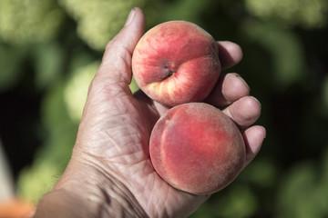 Ripened peaches.