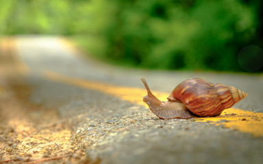 Snail crosses the yellow line on street,  Business and finance concept , success from patience ,Slow economic growth