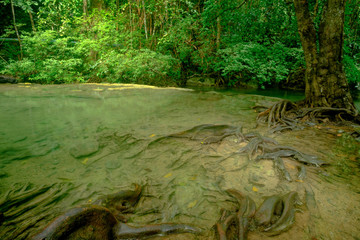Beautiful deep forest pond with root of tree  in Erawan National Park, Kanchanaburi, Thailand