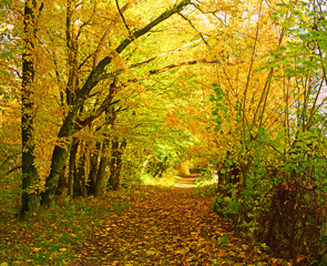 Autumn road in the forest between trees.