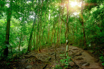 Beautiful deep forest in Erawan National Park, Kanchanaburi, Thailand