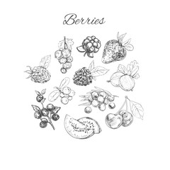 Vector hand sketched set of berries. Isolated objects. Nature