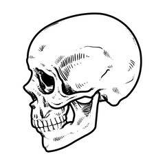 Skull Vector illustration, Collection Of Hand Drawn Skull