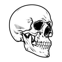 Skull Vector illustration, Collection Of Hand Drawn Skull, Hard Core Skull Vector Art