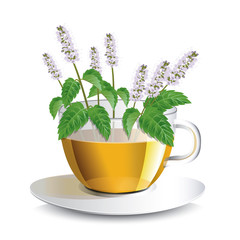 Vector illustration aromatic mint  tea in a transparent cup with flowers, a conceptual idea for the label