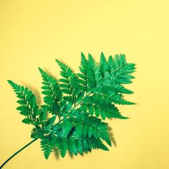 Tropical leaves on pastel color background.Jungle leaf close up.Botanical nature concept.Floral elements design,Green foliage